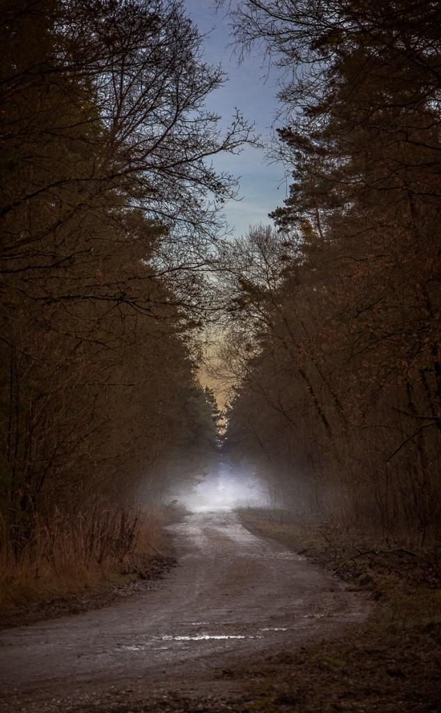 Waldweg Tennenlohe